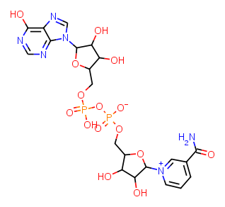 Nicotinamide purin-6-ol-dinucleotide diagram
